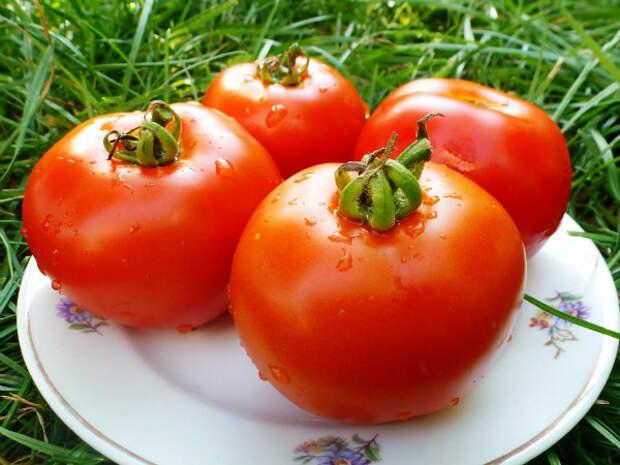 свежие помидоры зимой