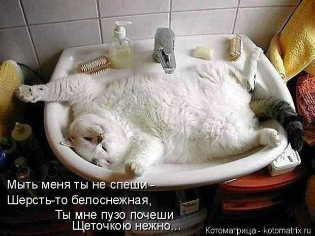 1451737524_kotomatricy