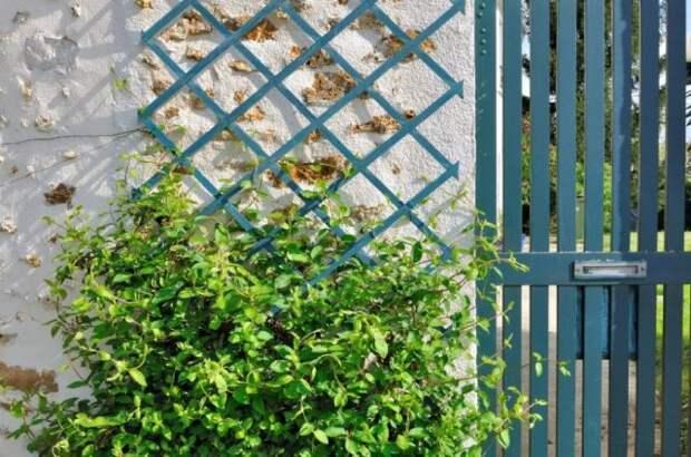 Решетка для вьющихся растений
