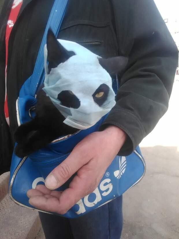 Даже животных кое-кто умудряется облачать в маски
