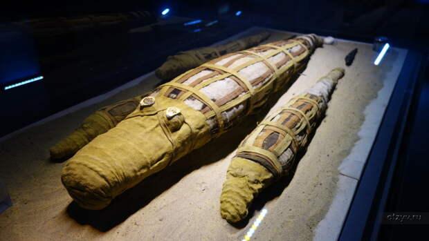 Зачем египтяне делали тысячи мумий крокодилов, и кто такой человек с головой рептилии