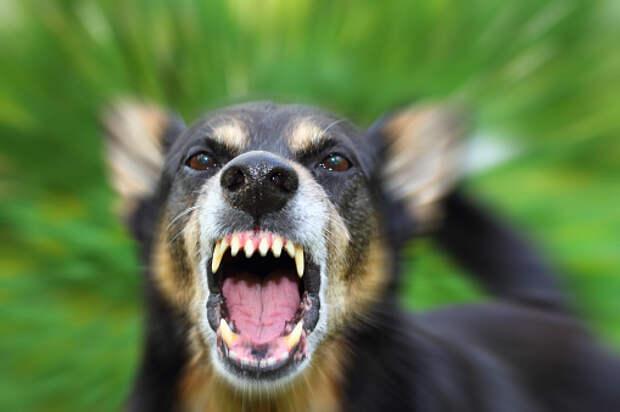Две собаки подрались у магазина на Арсюкова