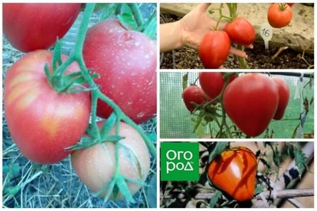 высокорослые томаты Немецкая красная клубника