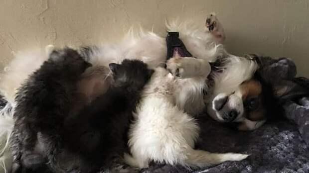 Котята как могли, оберегали больную сестричку. Вскоре они нашли новую маму