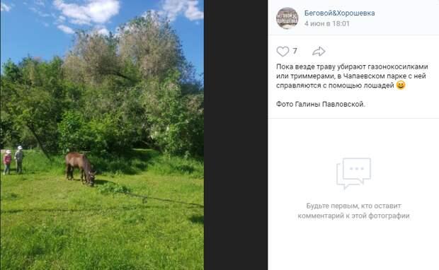 Фото дня: в Чапаевском парке конь «работает» газонокосилкой