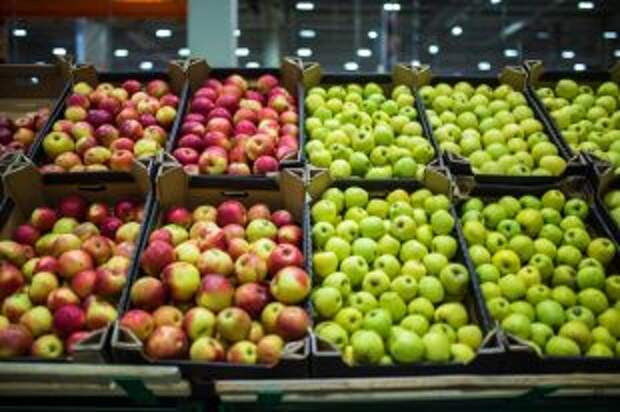 Чем обрабатывают яблоки для длительного хранения и можно ли ими отравиться?