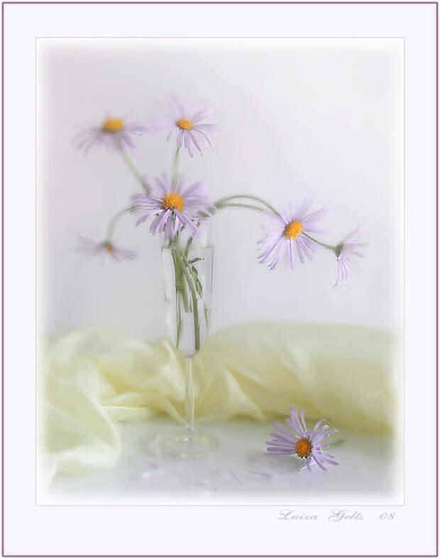 Совершенная красота. Фотонатюрморты от Luiza Gelts