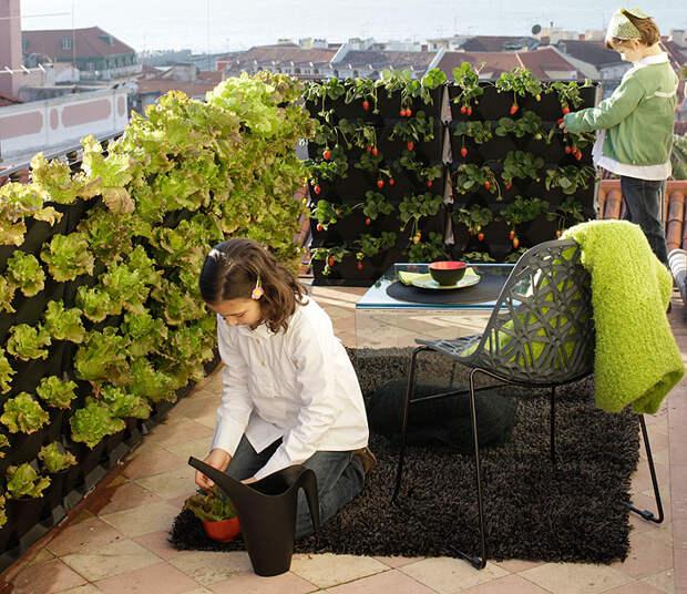 Такими вертикальными зелеными стенками можно оградить и зону отдыха, и детскую площадку.
