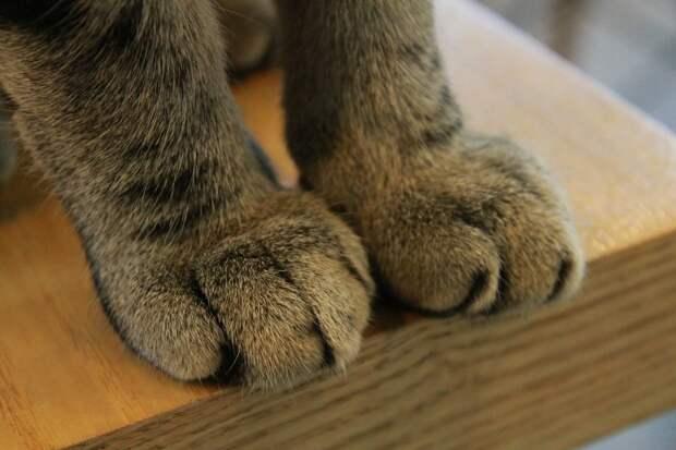 В Великобритании сбежавший слепой кот спустя 11 лет вернулся домой