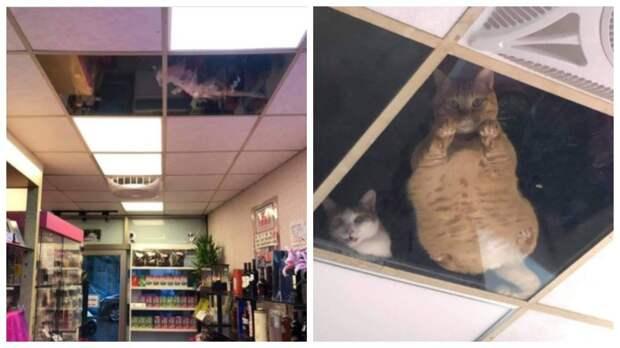 Когда котов находили там, где они не должны быть: 12 фото