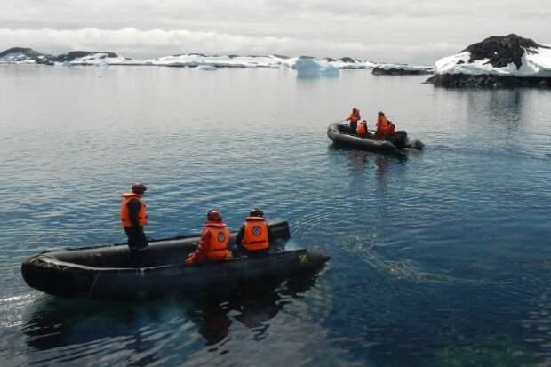 В Антарктике впервые обнаружены мидии