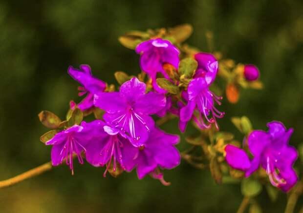 Растения, которые помогут прогнать мышей с вашего огорода