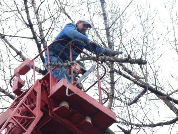 Коммунальщики спилили опасную ветку на Беговой улице