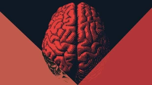 Как окружающая среда влияет на уровень IQ?