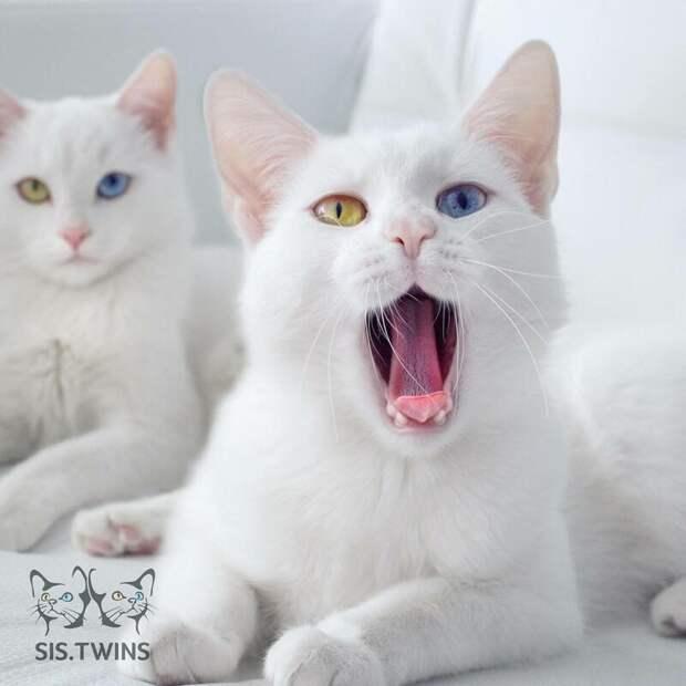 Белые сестрички с невероятными глазами: Айрис и Абисс
