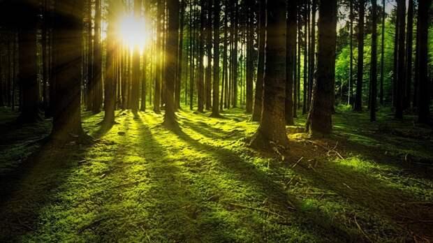 В Пермском крае ввели запрет на посещение лесов до 23 мая