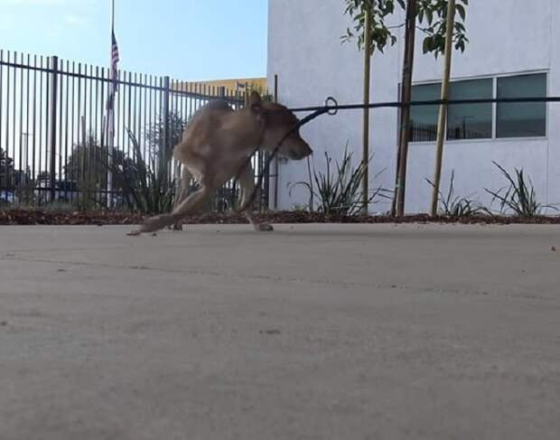 Бутылка с водой помогла спасти бездомного пса