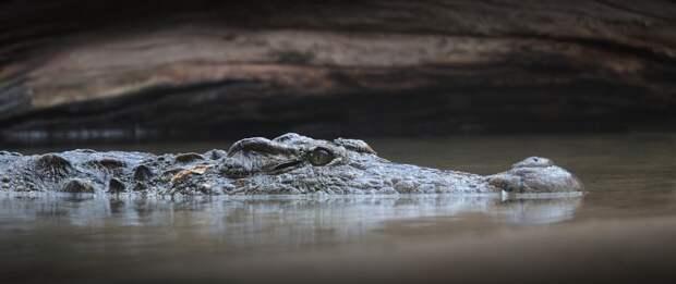 Крокодил Данди: рыбак из Австралии зацепил крючком своей удочки рептилию