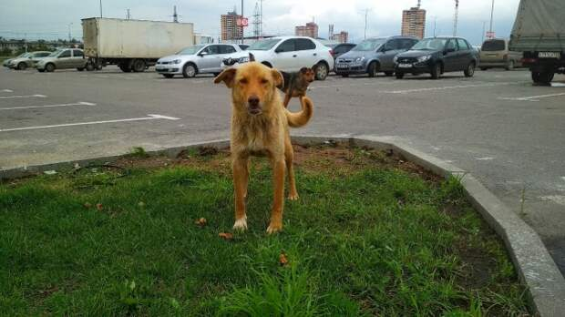 Новомосковцы призывают собаководов убирать за питомцами