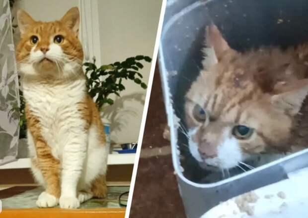 В Северодвинске женщина до смерти замучила кота своей свекрови