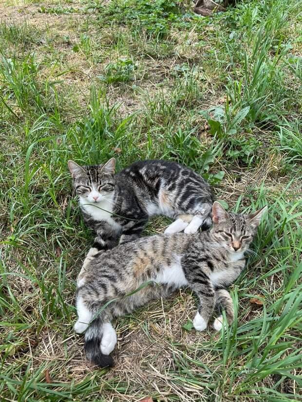 Пожалуйста, помогите! Мама-кошка с котёнком пропадают.