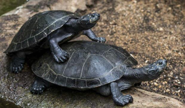 Откровения работницы зоопарка о животных