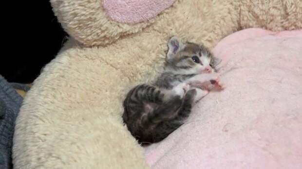 Котенок готовится ко сну. Мимиметр зашкаливает!