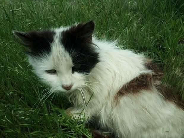 Кошка 3 года ждавшая свою хозяйку, нашла новую семью