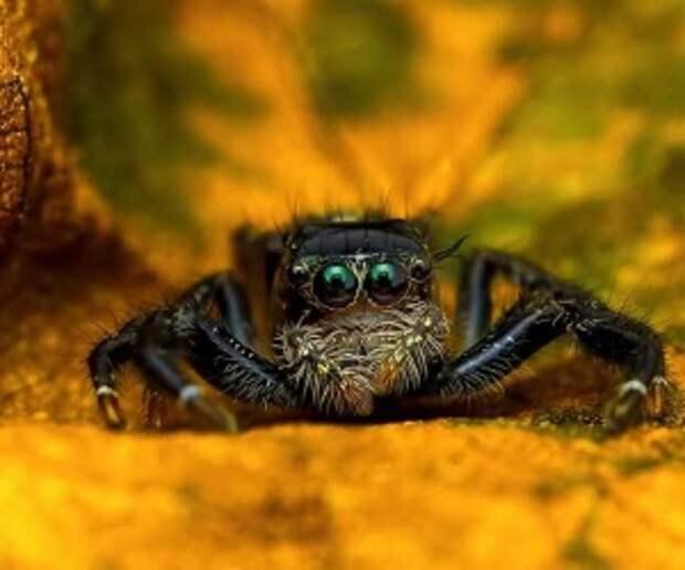 Макрофотографии малазийских пауков