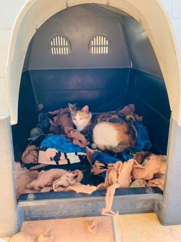 Питбуль уступил будку бездомной кошке, чтобы та смогла родить котят