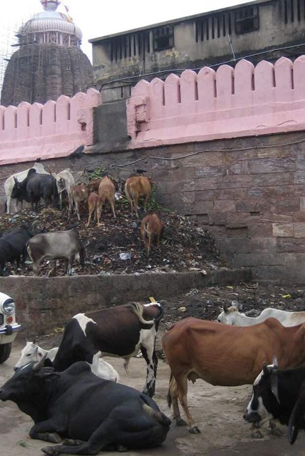 Последний путь индусов в Варанаси
