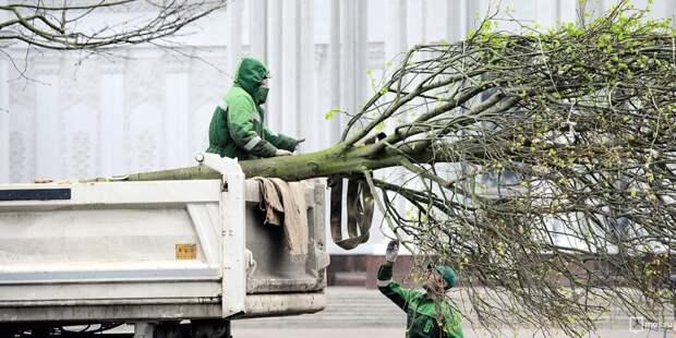 С проезжей части на Ташкентской сломанное дерево убрали после жалобы жителей