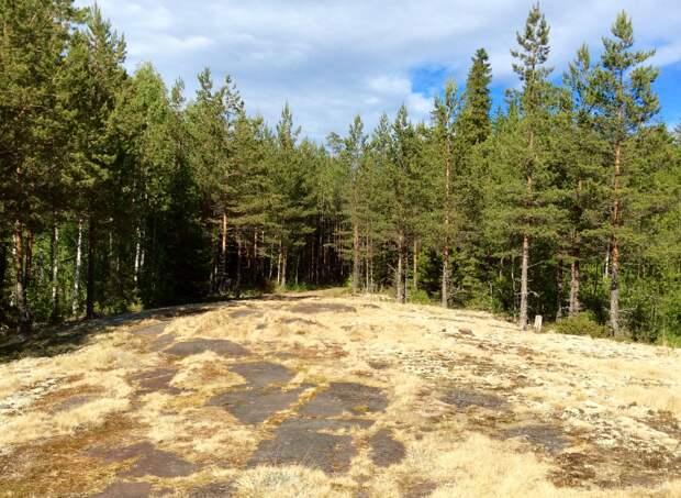 Путин поручил запретить вывоз необработанных лесоматериалов