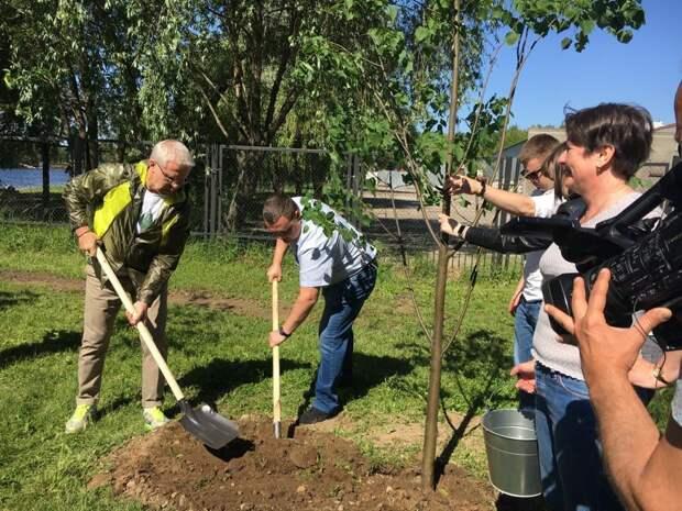 В Южнопортовом во время эко-субботника посадили липовую аллею