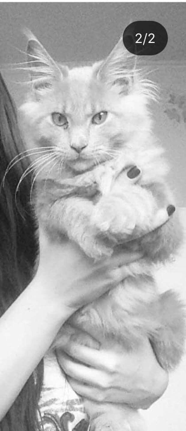 кот на руках
