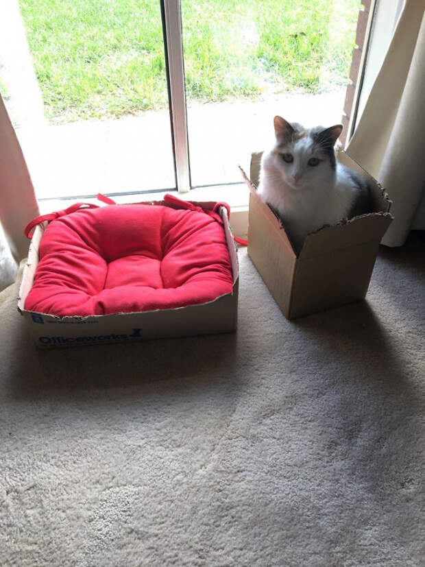 Про кошачьи лежаки, кошек и их логику
