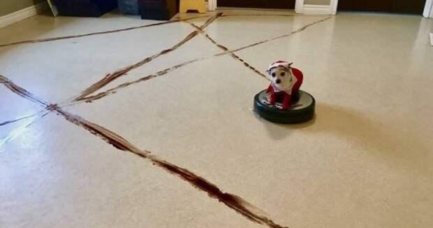 1. Не оставляйте животных и пылесос в одной комнате неудачные покупки, робот-пылесос, смешно, техника