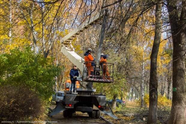 В Рязани спилили 33 аварийных дерева