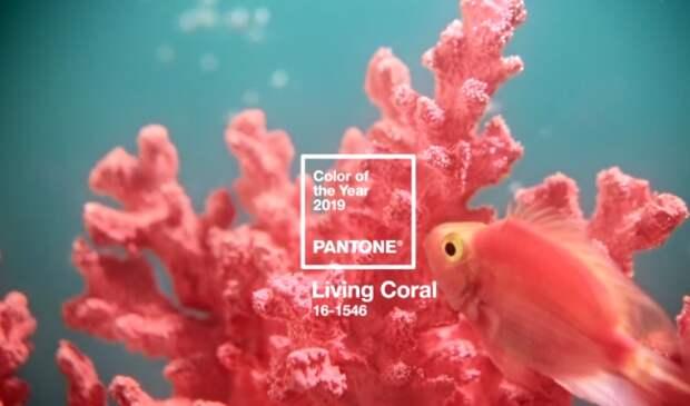 Pantone цвет года 2019: Живой Коралл