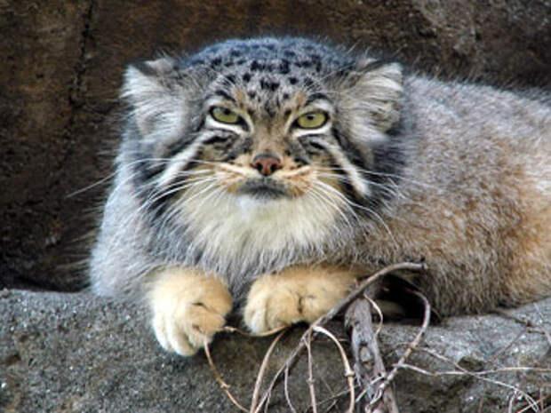 Фото №2 - Пушистая чума XXI века. Как коты захватили мир и Интернет