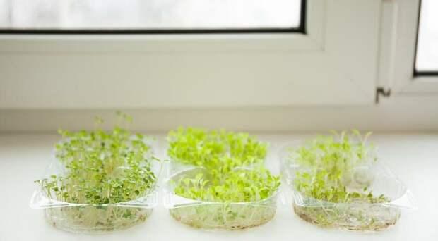 Квартирная ферма - как выращивать свежую зелень в своей квартире круглый год?