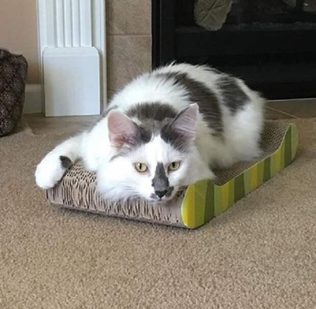 Кот и коробка