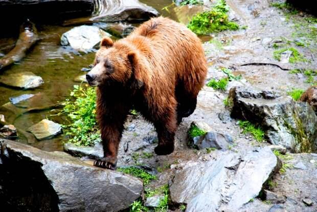 «Пляжную вечеринку» медведей на Аляске сняли на видео