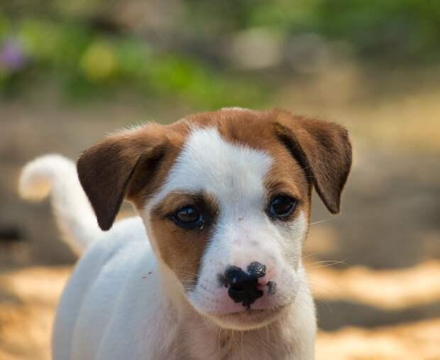 Приютившая щенка туристка в Филиппинах умерла от бешенства