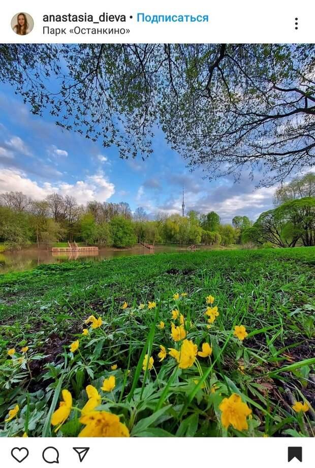 Фото дня: Останкинский парк зазеленел