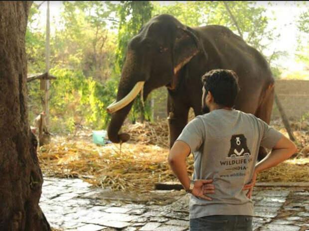 В Индии освободили слона, который 50 лет сидел на цепи и терпел побои