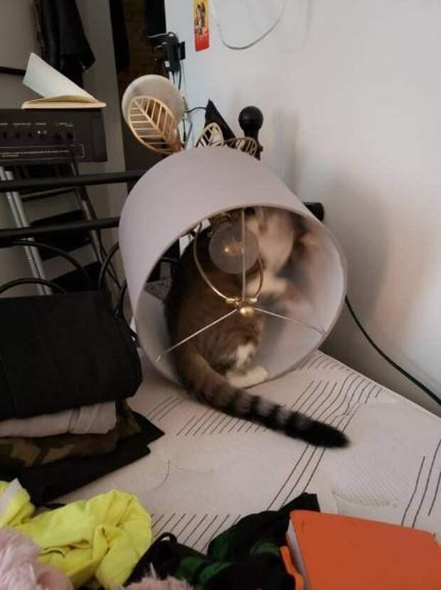 14 фото, после которых для котов не находится хороших слов
