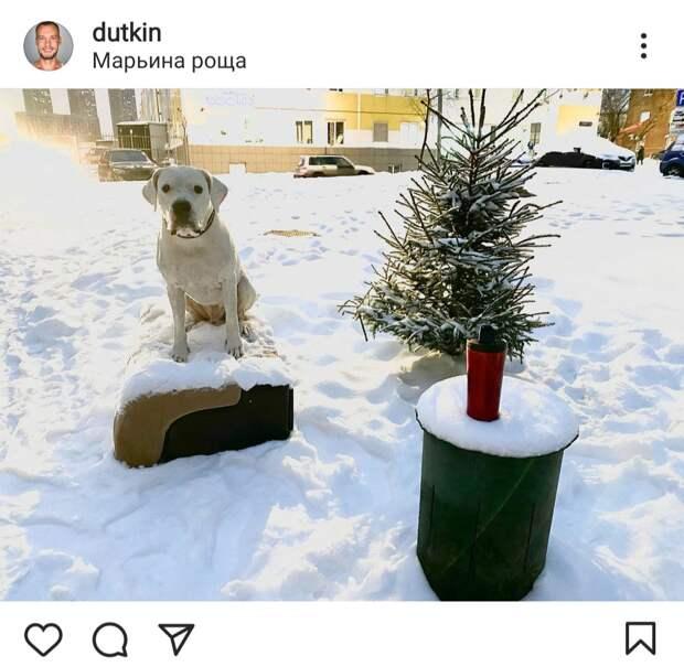 Фото дня: в Марьиной роще пес вышел на прогулку с кружкой чая