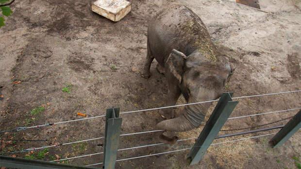 Недовольство от слонихи: необычный иск получил суд Нью-Йорка
