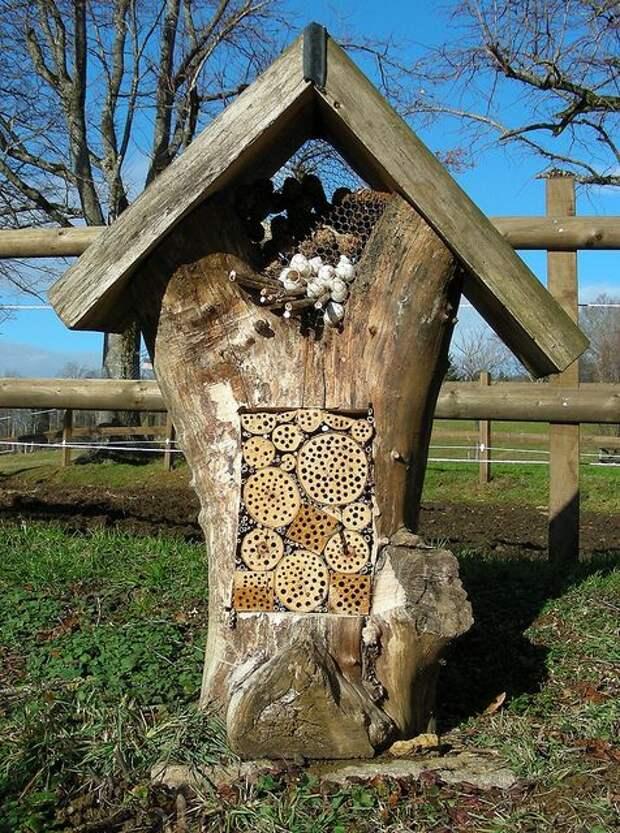 Отель для насекомых: как построить домик для букашек